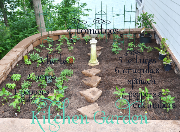 Garden Update, week 4
