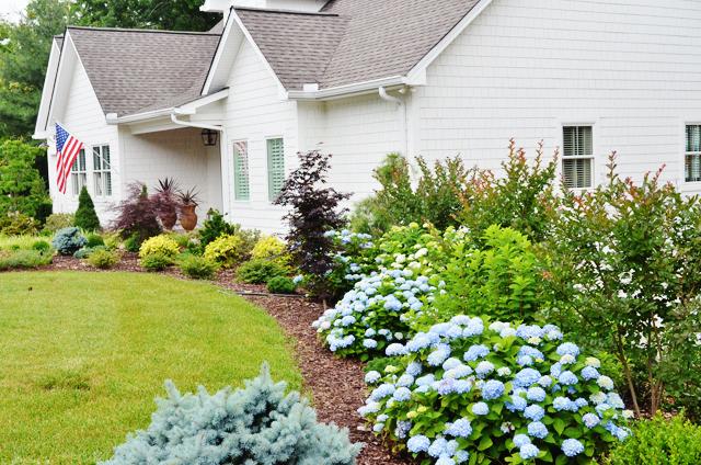 summerhousehydrangeas