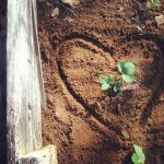 heart-in-soil